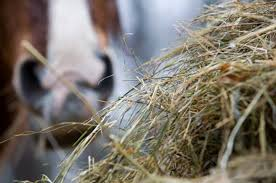 Hay and Haylage